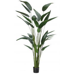 Rogue Sky Bird Plant Green 120x120x213cm