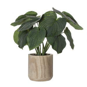 Rogue Giant Hosta Plant-Dansk Cylinder Pot Grey Green/Natural 65x60x65cm