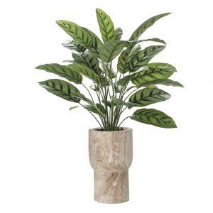 Rogue Calathea Plant-Artemus Pot Variegated/Natural 60x60x80cm
