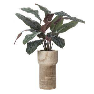 Rogue Calathea Plant-Astrid Pot Variegated/Natural 70x72x87cm