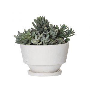 Rogue Echeveria Garden-Voss Bowl Green/Cream 25x22x24cm