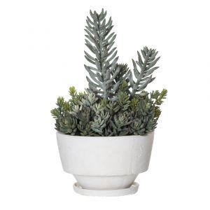 Rogue Echeveria Garden-Voss Bowl Green/Cream 31x30x47cm