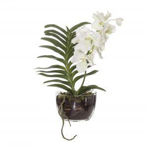 Society Home (SOC) Vanda Orchid-Classic Bowl White/Glass 44x34x60cm
