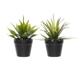 Rogue Agave-Garden Pot 2 Asst. Pack of 12 Green/Black 17/17cm