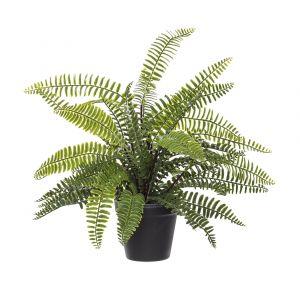 Rogue Boston Fern-Garden Pot Green/Black 44x48x33cm