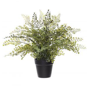 Rogue Maiden Hair-Garden Pot Green/Black 59x55x44cm