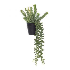 Rogue Black Label (RB) Sedum Garden-Garden Pot Green/Black 18x19x45cm