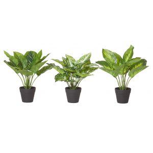 Rogue Indoor Plants-Garden Pot 3 Asst Variegated/Black 25/25/25cm