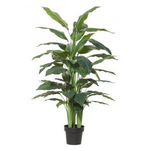 Rogue Spathiphyllum Plant-Garden Pot Green/Black 95x95x145cm