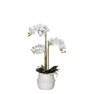 Rogue Butterfly Orchid-Basket Pot White/White 27x27x66cm