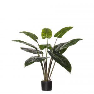 Rogue Philodendron Congo Plant-Garden Pot Green/Black 80x80x95cm