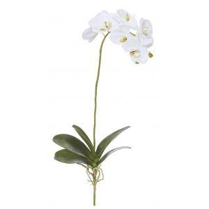 Rogue Deluxe Phalaenopsis Plant White 26x26x63cm