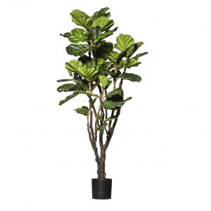Rogue Deluxe Fiddle Tree Green 90x90x183cm