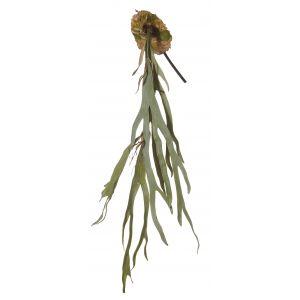 Rogue Staghorn Fern Green 20x10x95cm