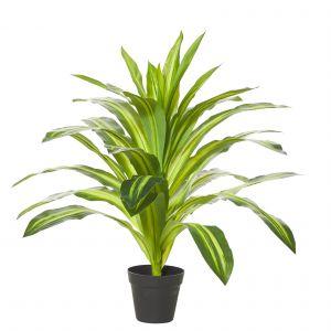 Rogue Dracaena Plant-Garden Pot Variegated/Black 65x65x60cm