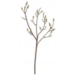 Rogue Magnolia Bud Stem Natural 26x10x71cm