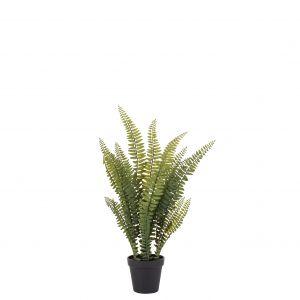Rogue Boston Fern-Garden Pot Green 23x23x51cm
