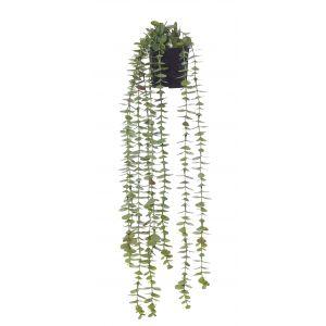 Rogue Coin Leaf Hanging Bush-Garden Pot Green/Black 15x13x67cm