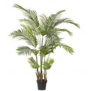 Rogue Areca Palm Green 110x110x170cm