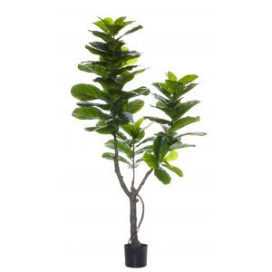 Rogue Giant Fiddle Tree Green 85x85x180cm