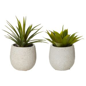 Rogue Agave-Tub Pot 2 Asst. Pack of 6 Green/White 18/16cm