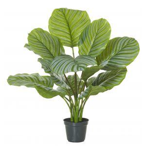 Rogue Calathea Plant-Garden Pot Variegated/Black 50x50x64cm