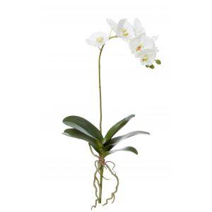 Rogue Phalaenopsis Plant White 27x12x66cm