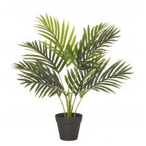 Rogue Areca Palm Tree-Garden Pot Green 50x50x55cm