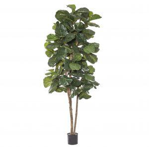Rogue Grand Fiddle Tree Green 80x80x240cm