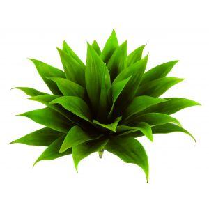 Rogue Agave Basic Green 60x60x55cm