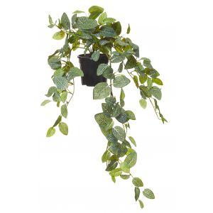 Rogue Fittonia Hanging Bush-Garden Pot Green/Black 55x50x70cm
