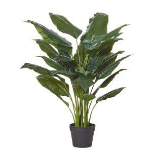 Rogue Spathiphyllum Plant-Garden Pot Green/Black 93x93x110cm