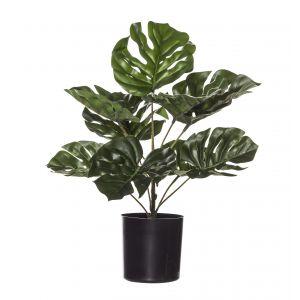 Evergreen by Rogue EG Monstera Plant-Garden Pot Green/Black 35x35x30cm