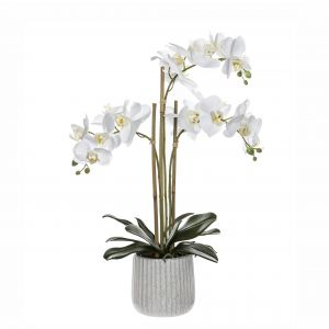 Rogue Butterfly Orchid-Ceramic Pot White/Cream 45x30x60cm