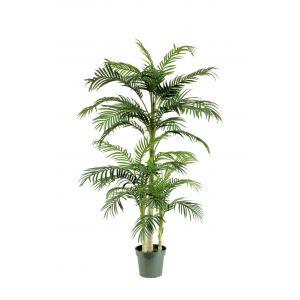 Rogue Cane Palm Green 100x100x198cm