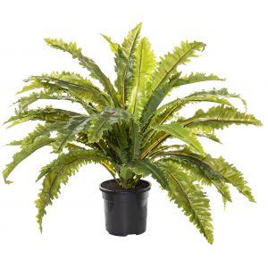 Rogue Asplenium Fern-Garden Pot Green/Black 60x60x46cm