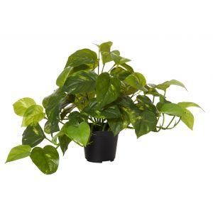 Rogue Pothos-Garden Pot Variegated/Black 50x30x30cm