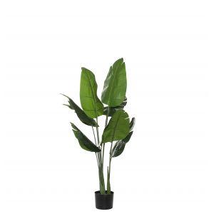 Evergreen by Rogue EG Bird of Paradise-Garden Pot Green/Black 70x70x110cm