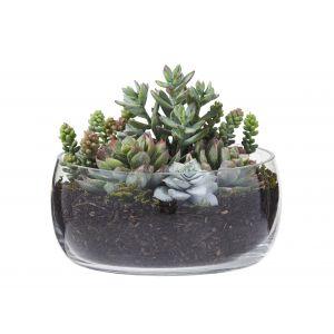 Rogue Succulent Garden Mix-Scarlett Bowl Green/Glass 22x22x20cm