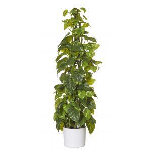 Rogue Pothos Climbing Plant-White Pot Green/White 30x30x91cm
