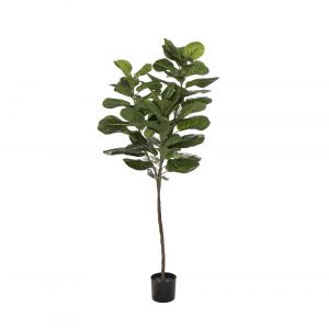 EG Fiddle Tree 32.913.12