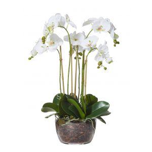 Rogue Phalaenopsis-Classic Bowl White/Glass 42x39x68cm