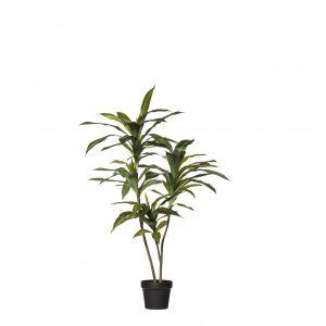 Rogue Dracaena Fragrans Tree Green/Black 80x70x110cm