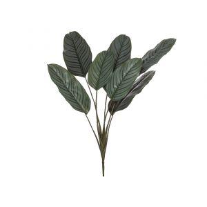 Rogue Calathea Plant Variegated 60x60x84cm