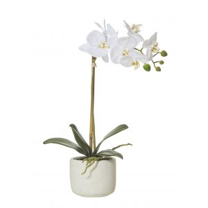 Rogue Butterfly Orchid-Smooth Pot White/Cream 25x10x45cm