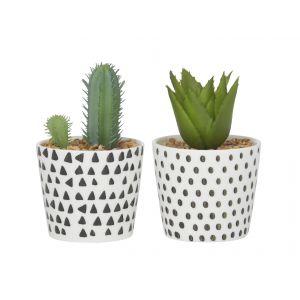 Emporium Sia Succulent In Pot 2 Asst Designs 6 Triangles/6 Spot 13/15cm