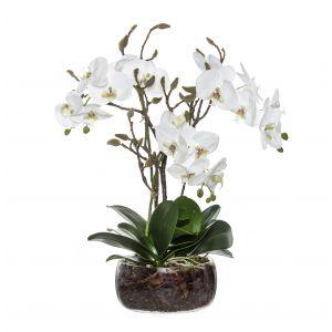 Rogue Black Label Phalaenopsis Bud Mix-Scarlett Bowl White/Glass 39x30x60cm
