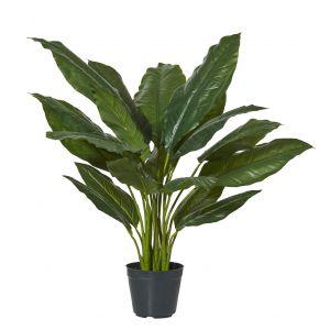 Rogue Spathiphyllum Plant-Garden Pot Green/Black 85x85x80cm