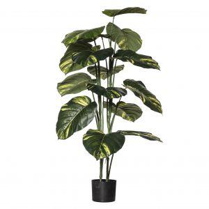 Evergreen by Rogue EG Pothos Plant-Garden Pot Variegated/Black 70x70x120cm