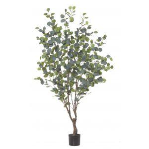 Rogue Eucalyptus Tree Green 100x100x180cm